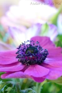 Atelier Fleur de Mai fleurs 3 ok